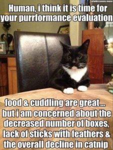 Cat Evaluates Human